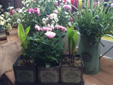 Country flowers in botanical pots