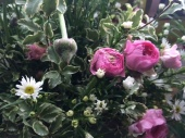 Ranunculus, September flower and pittosporum