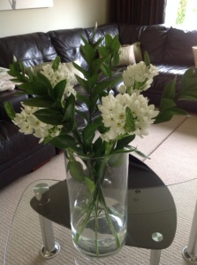 Picture of Chincherinchee on table in vase
