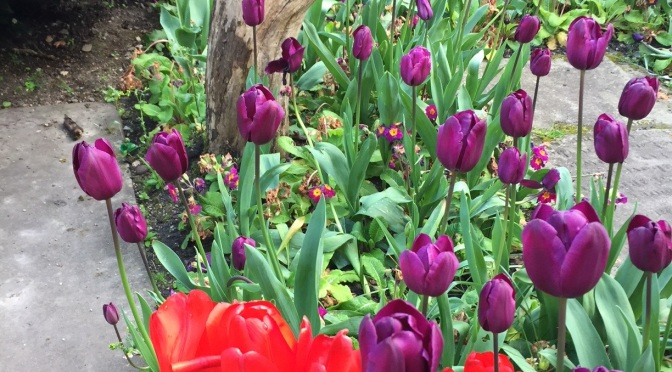 Be original this year with Tulips on Valentine's Day